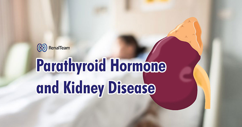 parathyroid-hormone-and-kidney-disease